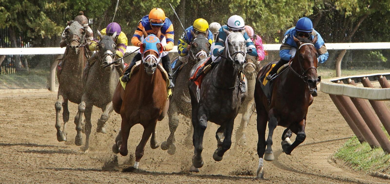 Cretata per cavalli